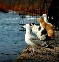 cats and seagulls - natural friends?