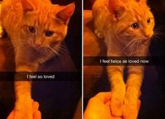 Kitty wants to hold your hands.........and maybe give you some bad news, but comfort you while doing so lol!