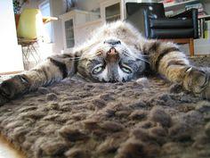 Hollis.  Lazy Cat.