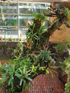 Bromeliads, Tillandsias and Orchids. Unique Plants, Exotic Plants, Tropical Plants, Outdoor Plants, Air Plants, Outdoor Gardens, Indoor Gardening, Bonsai Garden, Garden Plants
