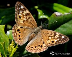Butterflies and Moths of North America   collecting and sharing ...