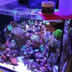"""322 Likes, 14 Comments - @the_reef_2.0 on Instagram: """"In the video, I show you how I feed my corals with #reefroids . How you feed your corals? Like me?…"""""""