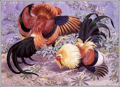 Charles Frederick Tunnicliffe (1901-1979) - The Cockfight. Pencil/watercolour.