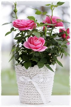 Found several darling little mini-rose plants at the Store, and wrapped up the pots in some simple crocheted plant cozies. And so inexpensive, too. Romantic Roses, Beautiful Roses, Comment Planter Des Roses, Rose Plant Care, Rosa Rose, Planting Roses, Mini Roses, Pink Garden, Rose Cottage