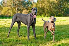 The Dogs   Flickr - Photo Sharing!