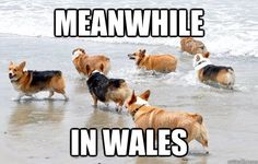 Corgi-land! Apparently all of the corgis are in Wales. I spent 3 weeks in England and did not see one!