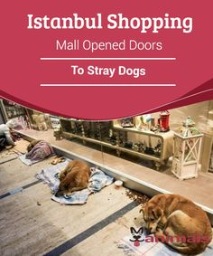 Istanbul Shopping Mall Opened Doors To Stray Dogs   The only thing we can say about this is that we wish animals were treated with such kindness the world over. Can you imagine a shopping mall opening its doors to let stray dogs sleep there anywhere else in the world?