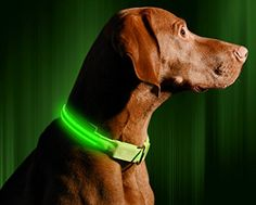 LED Dog Collar USB Rechargeable Medium 16  20  41  53cm Neon Green * You can get more details by clicking on the image.Note:It is affiliate link to Amazon.