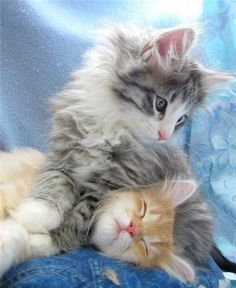 Cuddle buddies.  ATTACKOFTHECUTE.COM