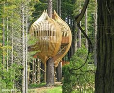 The design for this treehouse was inspired by a chrysalis. The walkway is built using redwood and the fins and slats are built from sustainably grown pine and poplar. The structure uses glulam (glued laminated timber) which is used as a replacement for steel.