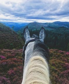 Basic Rules About Horseback Riding For Beginners - FashionActivation Pretty Horses, Horse Love, Beautiful Horses, Cavalo Wallpaper, Equine Photography, Adventure Is Out There, Horseback Riding, Horse Riding, Beautiful Creatures