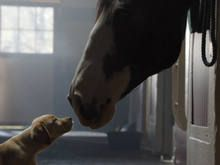 Budweiser cria continuação de comercial do Super Bowl 2013 - http://marketinggoogle.com.br/2014/01/29/budweiser-cria-continuacao-de-comercial-do-super-bowl-2013/