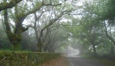 Lavacolla--foggy morning walk into Santiago -- article about re-entry into civilized world The Camino, Foggy Morning, Hard Part, Pilgrimage, 50th Birthday, Goal, Country Roads, Camino De Santiago, Driveways