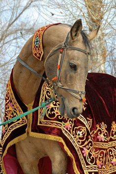 Horse of Royalty
