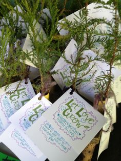 Redwood sapling favors  |  Amphitheatre of the Redwoods at Pema Osel Ling | Wedding and Event Venue | Santa Cruz Mountains, CA | Redwood Forest Wedding