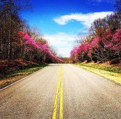 Gorgeous redbuds on the scenic Natchez Trace near Franklin, TN. Natchez Trace, Spring Time, Scenery, Hiking, Country Roads, Travel, Walks, Viajes, Landscape