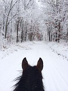 anyone who loves horses House Of Night, Winter Horse, Horse Ears, Horses And Dogs, Horse Photos, Horse Photography, Horse Love, Horseback Riding, Horse Riding
