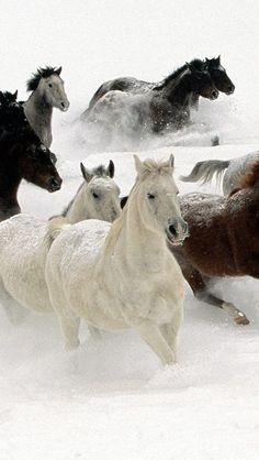 Galloping horses - Winter - Snow