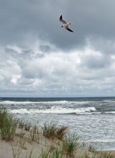 A gull in a storm.