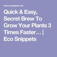 Quick & Easy, Secret Brew To Grow Your Plants 3 Times Faster… | Eco Snippets