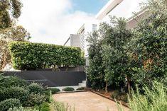 Dover Heights Australian Garden Design, Australian Native Garden, Contemporary Garden Design, Landscape Design, Backyard Pool Designs, Backyard Ideas, Garden Ideas, Pool Ideas, Beach Gardens