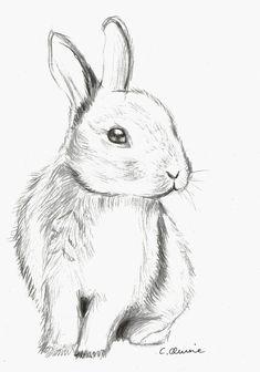 Pencil Art Drawings, Art Drawings Sketches, Cute Drawings, Sketch Art, Sketch Of Cat, Fluffy Bunny, Bunny Art, Cute Bunny, Bunny Bunny