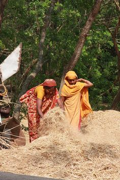 Bangladeshi women threshing their wheat crop by ACIAR Australia, via Flickr