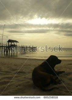lonely dog relaxing at the beach at sunset in Koh Samet Thailand