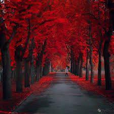 Risultati immagini per equinozio d'autunno
