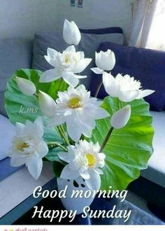 If you want to send good morning love images to your friends and relatives then you have the best good morning images available on our website. Good Morning Love You, Good Morning Roses, Good Morning Happy Sunday, Good Morning Images Flowers, Good Morning Greetings, Gd Morning, Happy Wednesday, Sunday Morning Images, Good Morning Photos