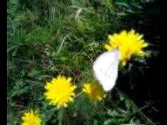 Perhonen kesään luonnossa (+soittolista) luonto kukaat tuoksuvat kevään aikana omilla