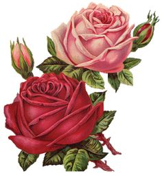 Leaping Frog Designs: Vintage Pink and Red Roses Free PNG Image - Clip Art Library Victorian Flowers, Antique Roses, Vintage Flowers, Vintage Floral, Vintage Birds, Clip Art Vintage, Images Vintage, Vintage Diy, Rose Images
