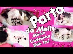 Parto da Melly | Minha Cadelinha Shih Tzu!