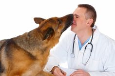 Work with your vet to keep your dog healthy.