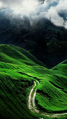 Nature-iPhone-5-Wallpapers-HD-11.jpg