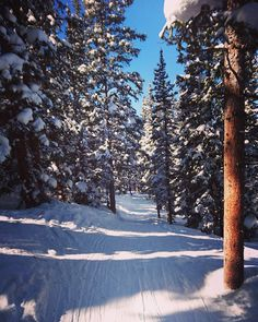 Riding  through the magical forest   #ski #Colorado #winterpark #winter #snow #snowboard #backcountry #backcountryskiing #freeride #weekend #America #usa #friends #sunny #forest #tree #igersedinburgh http://ift.tt/1nX1bkj
