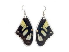 Real Butterfly Wing Earrings from www.asananaturalarts.com