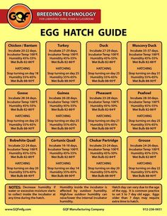 Egg hatch guide- Infographic