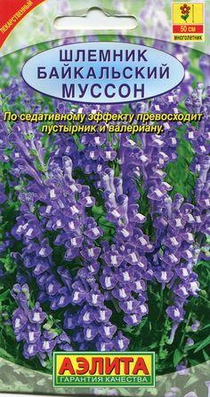 Baikali tihashein ''Musson'' Scutellaria baicalensis