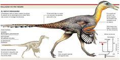 El Buitreraptor