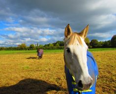 You will pass lovely houses and pat quite a few horses in this month's walk around Mobberley and Great Warford, writes Howard Bradbury. Swift Animal, Tarmac Drives, Olympic Cycling, Brick Arch, Metal Gates, Great Walks, Winter Walk, Cute Horses