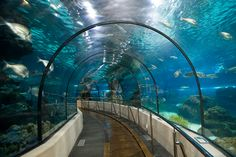 The Barcelona Aquarium is the most important in Mediterranean theme of the world. It houses more than 11,000 marine animals of 450 different species where children and adults will experience the feeling of walking on the seabed.