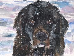 Newfoundland watercolor Print of the Original painting Winter decor Snow Landseer Dog Original Art cute Black Canvas Artwork, Canvas Art Prints, Painting Prints, Dog Paintings, Original Paintings, Original Art, Watercolor Print, Watercolor Paintings, Landseer Dog