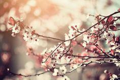 "500px / Photo ""Sakura"" by Alex Teuscher"