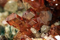Grossular (Var: Hessonite), Ca3Al2(SiO4)3, Pellice Valley, Torino Province, Piedmont, Italy. 3.96 mm group of Hessonite crystals. Copyright: © Chinellato Matteo