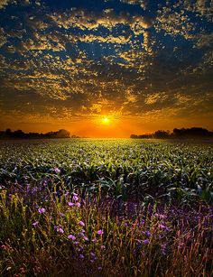 Photo by Phil Koch.