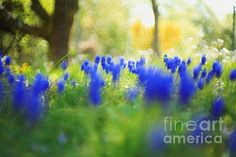 Title  Beauty Of Spring   Artist  Maria Bobrova   Medium  Photograph - Photography