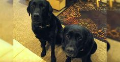 Mom Films Funny Dog Snitching On Sibling via LittleThings.com