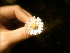 Baby flower(: