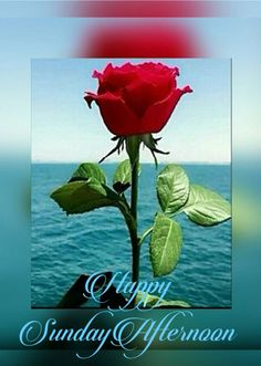 Good Morning Flowers Pictures, Good Morning Images, Flower Pictures, Happy Sunday Friends, Happy Sunday Quotes, Good Afternoon Quotes, Good Morning Quotes, Evening Greetings, Heart Touching Lines